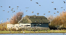 Cley-Marshes,-Barry-Madden.jpg