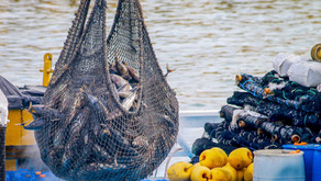 Safe, Sustainable Seafood