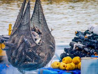Analizan crear sector de área marina protegida para evitar robo y regular la explotación pesquera