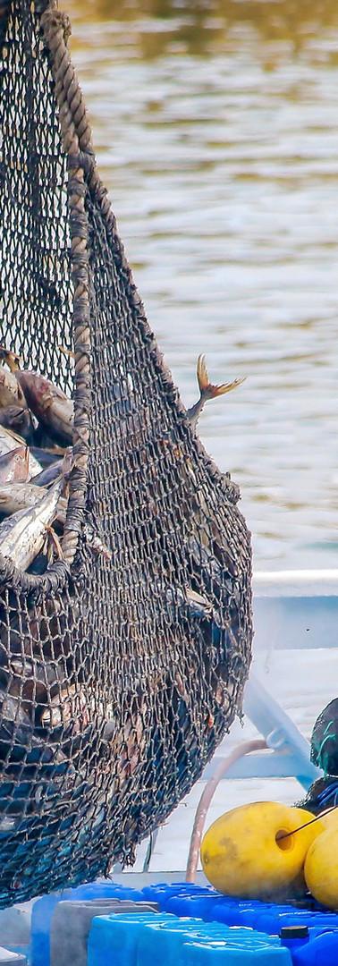 Balık ağı