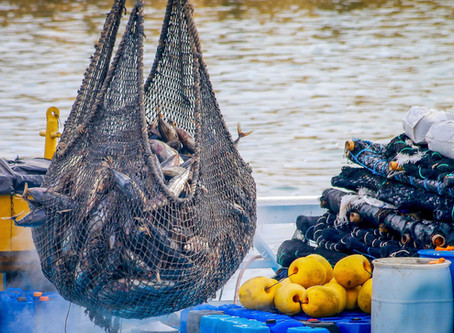 From Sea To Table: Supporting Local Fisherman
