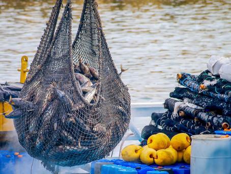 Subvenciones para Equipamiento a las Cofradías de Pescadores, Federaciones y Cooperativas del Mar