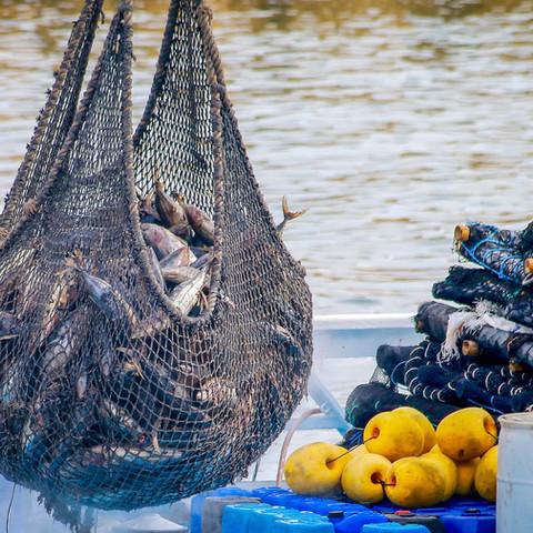 Protagonista de la seguridad alimentaria de México, sector pesquero y acuícola: Agricultura