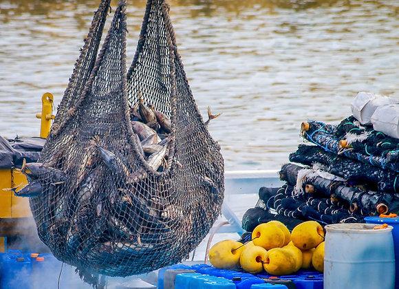 Flotas de pesca