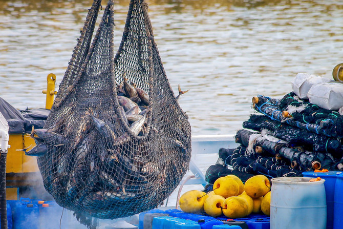 Need to address gaps in global fisheries observation