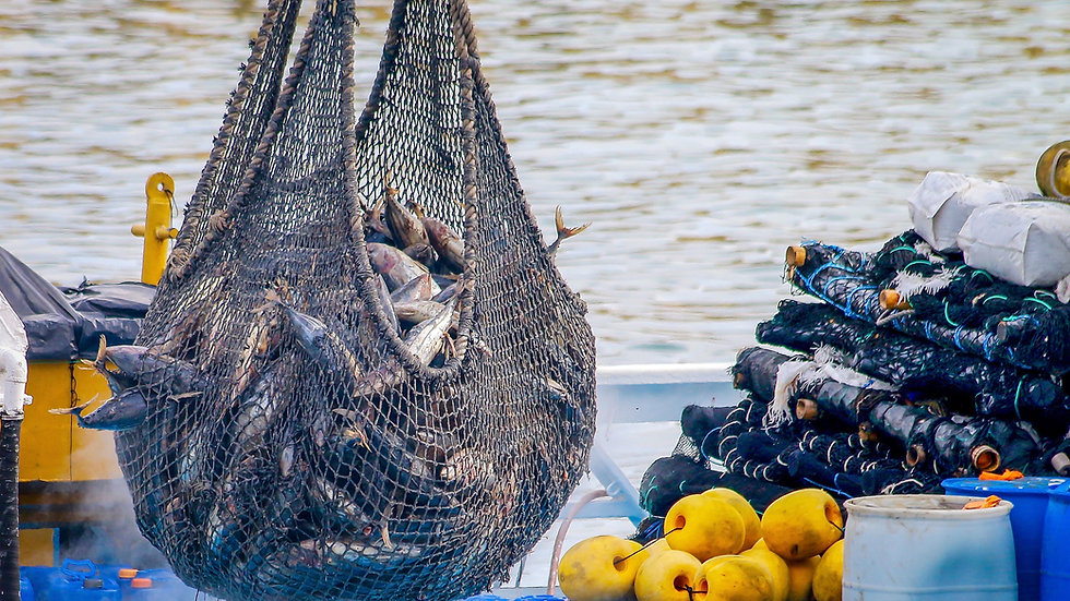 Hazard Analysis and Critical Control Points for Fish and Fishery Products