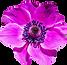 PNGPIX-COM-Flower-PNG-Transparent-Image.