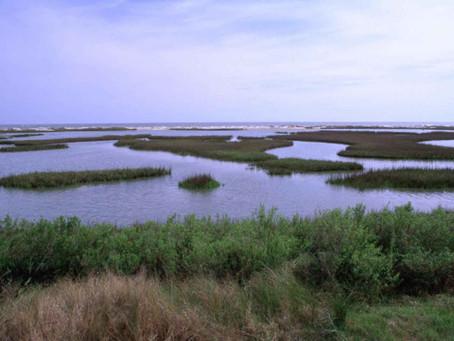 Marsh Madness Highlights Symbiosis