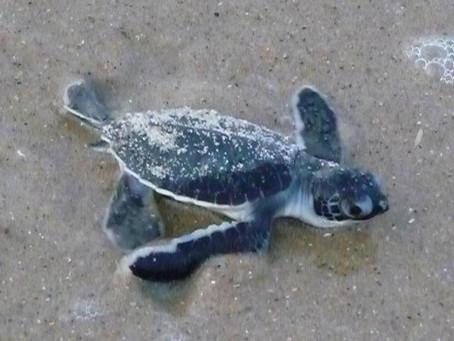 Turtley Adventures