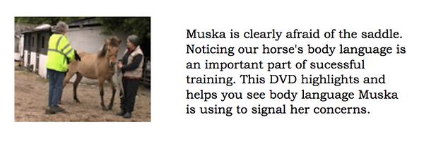 Muska afraid of saddle.png
