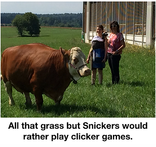 Snickers in the field.png