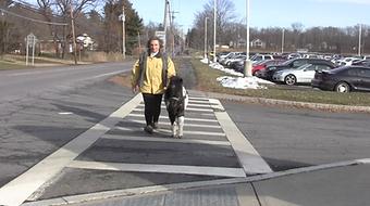 Panda walk 1.1.17 zebra crossing.png