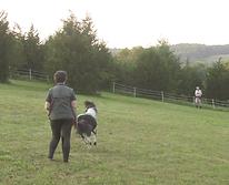 Panda catch in field 1.png