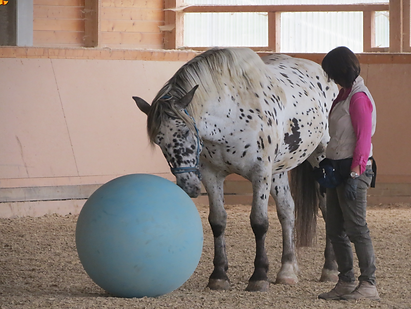 spotted horse with ball.png