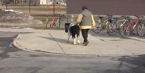 Panda walk 1.1.17  by bikes.png