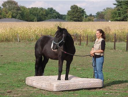 horse on mattress.png