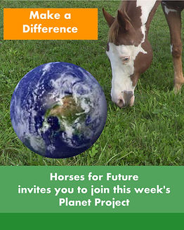 Horses for Future Tonnerre Project 1.jpg