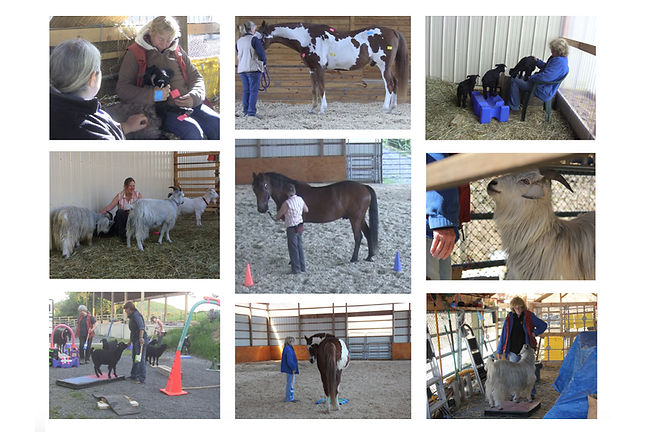 Barn visit collage 3.jpg