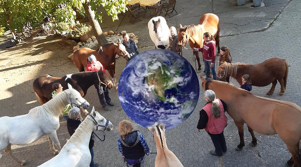 Horses for future photo 1 Horses around