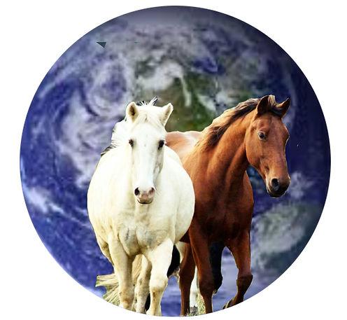 Horses for future photo 4 2 horses white