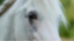 Asfaloth close up head shot.png
