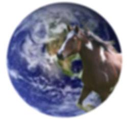 Horses for future photo 3 dreamer image