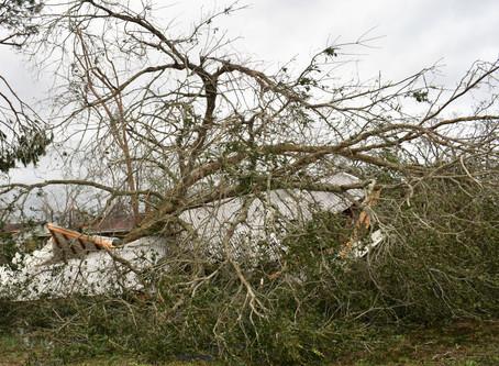 "Hurricane Michael Stole ""Normal"""
