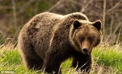 TO DO: See a grizzly in the wild