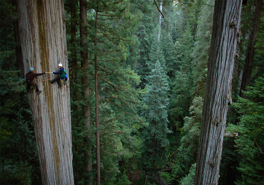 TO DO: Climb a Redwood tree