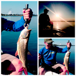 Catch a tiger fish - Mighty Zambezi