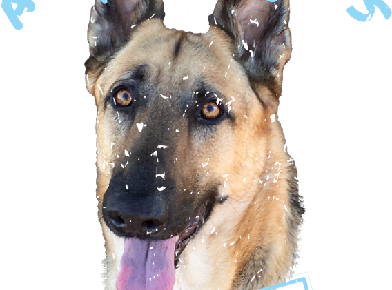 CUSTOM DOG LOVER TEE