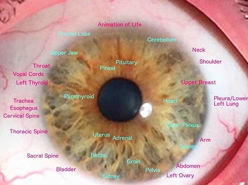In-Depth Iris Report + Herbal Protocol