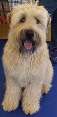 Shipston on stour puppy training