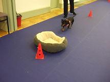 Evesham Dog training