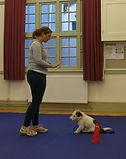Worcestershire puppy training