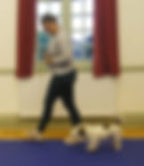 Pershore Dog training