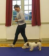 Pershore Dog training