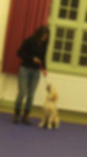 Pershore puppy training