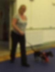 Dog training Evesham