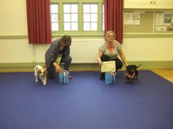 Puppy Improver's Graduation 26/06/16