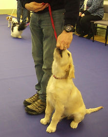 Evesham puppy training classes