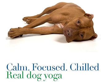 Dog yoga Worcestershir
