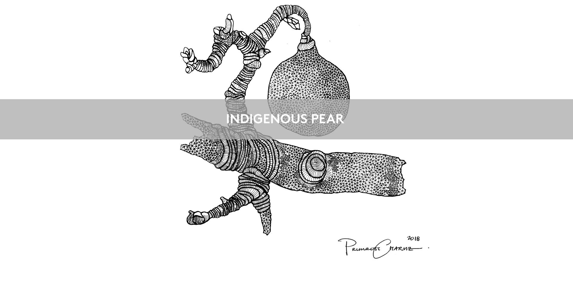 Indigenous-Pear Art.jpg