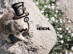 Herr Heschl.