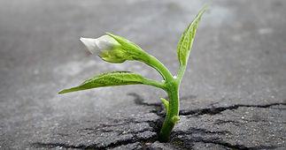 www.boredpanda.com/plants-flowers-versus-concrete-asphalt-pavement