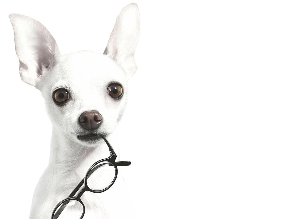 Hund-forside.jpg