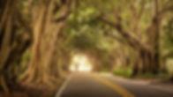 road-823199_1920.jpg