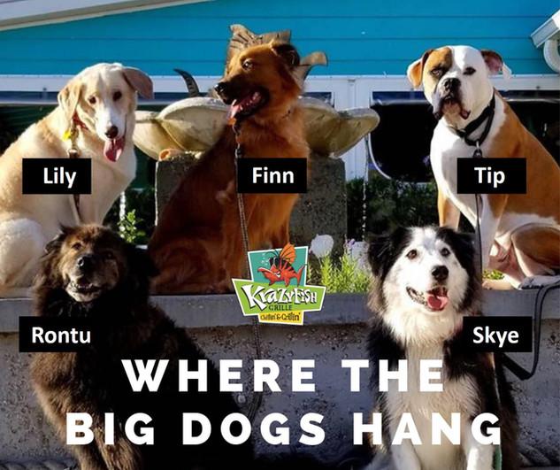 Where the Big Dogs Hang