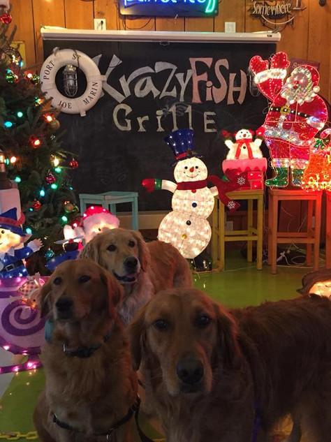 Christmas Lab Trio ❤️❤️❤️