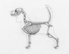 viz_skeleton.jpg
